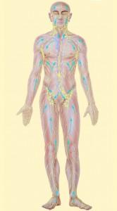 lymphman-with-arrow-pale-yellow-background-166x300